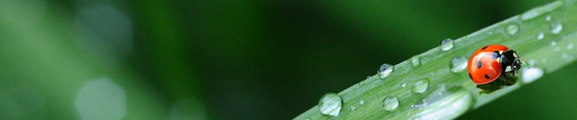 Catégorie: Environnement / développement soutenable